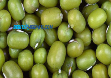Manfaat Kacang Hijau Buat Sakit Tembolok Keras