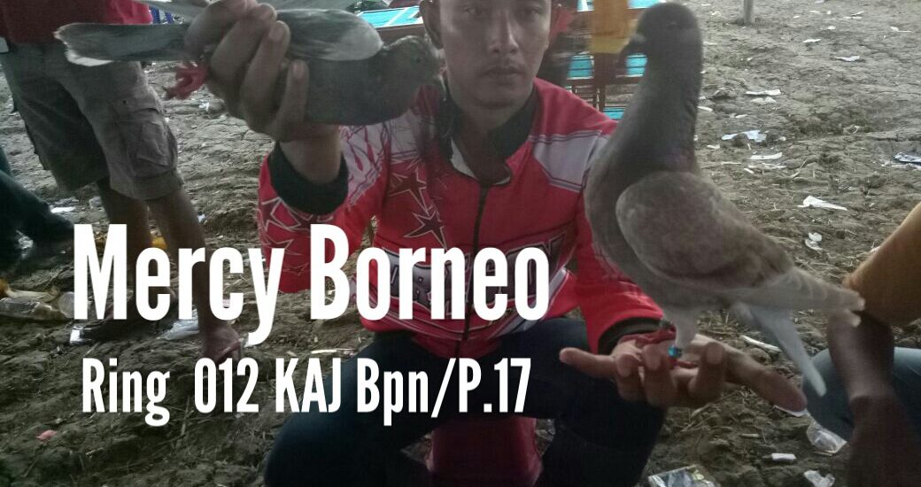 Mercy Borneo Trah Singalaga & Joko Cilik